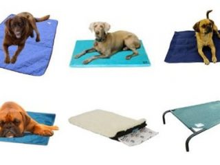 cooling dog beds