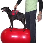 FitPAWS Peanut Dog Exercise Ball Stance Measurement