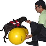 FitPAWS Peanut Dog Exercise Ball Height Measurement