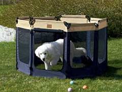Confinement Keeps Recovering Dogs Safe