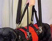 Wyatt Models AST Get A Grip Dog Harness