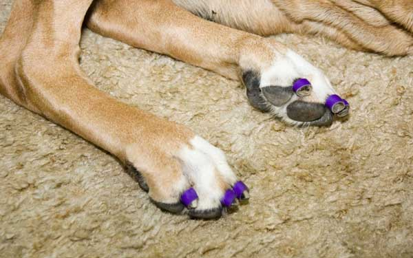 Tripawds Gear 187 Dr Buzby S Toe Grips Help Three Legged