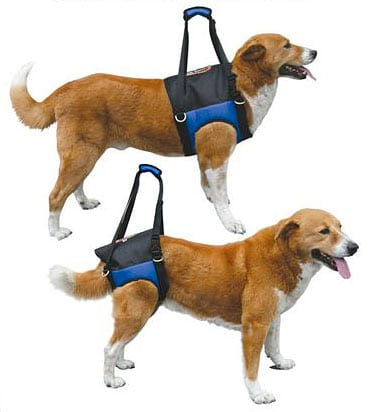 Back Harness For Dogs Bing Images