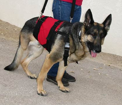 Tripawds Gear 187 Best Support Harnesses For Three Legged