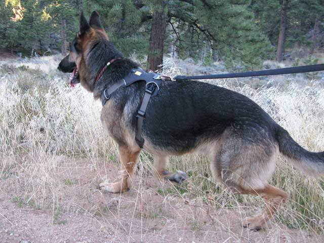 Front Range Dog Harness Review