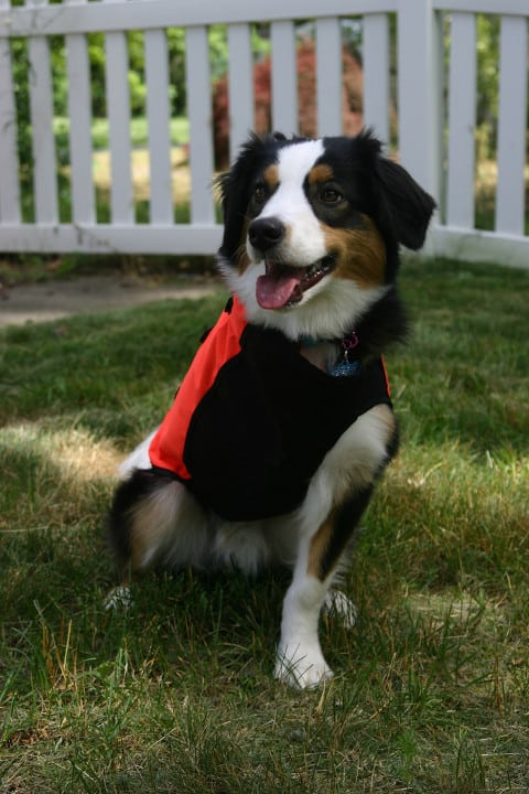 Tripawd chest protector