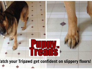 No-Slip floors for three-legged dog