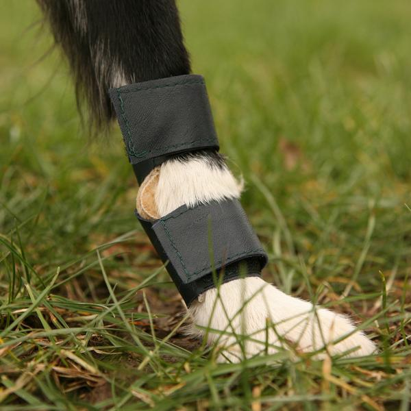 Tripawds Gear 187 Carpal Pad Protection For Three Legged Dogs