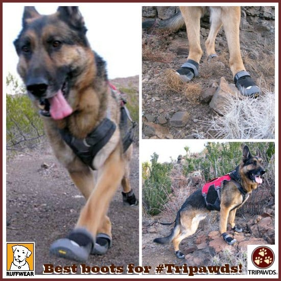 Tripawd dog boots