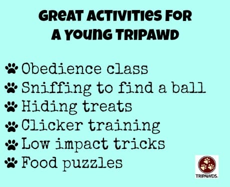 exercise young recovering tripawd dogs cats
