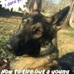 exercise young recovering Tripawd dogs