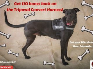 Best Tripawd harnesses