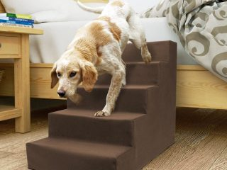 pet steps and ramp training