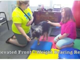 Tripawd Exercise Ideas with Balance Pad