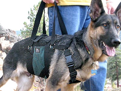 Tripawd, dog, harness, Get-a-Grip