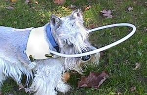Angel Vest Cane for Blind Dogs