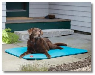 Keep Dogs Cool and Save on Dog Beds at FetchDog