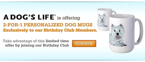 FetchDog Birthday Club Free Gifts