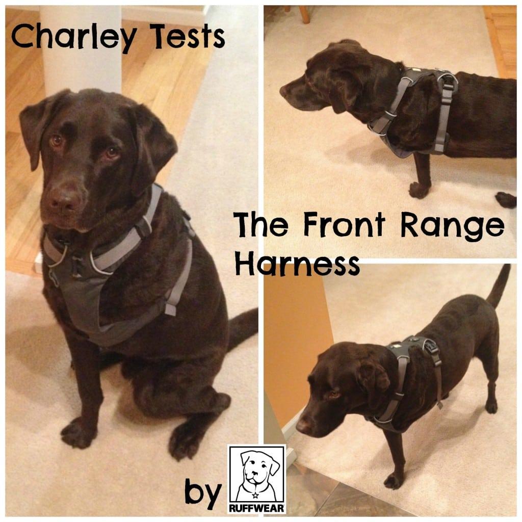 Tripawd Charley Ruffwear Front Rage Harness