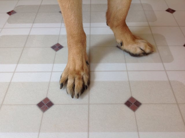 Puppy Treads for Tripawds