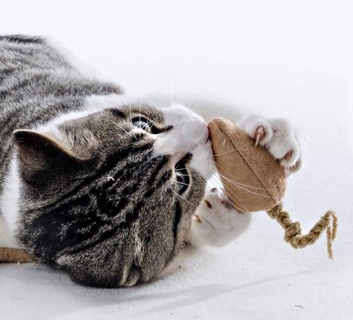 organic pet toys