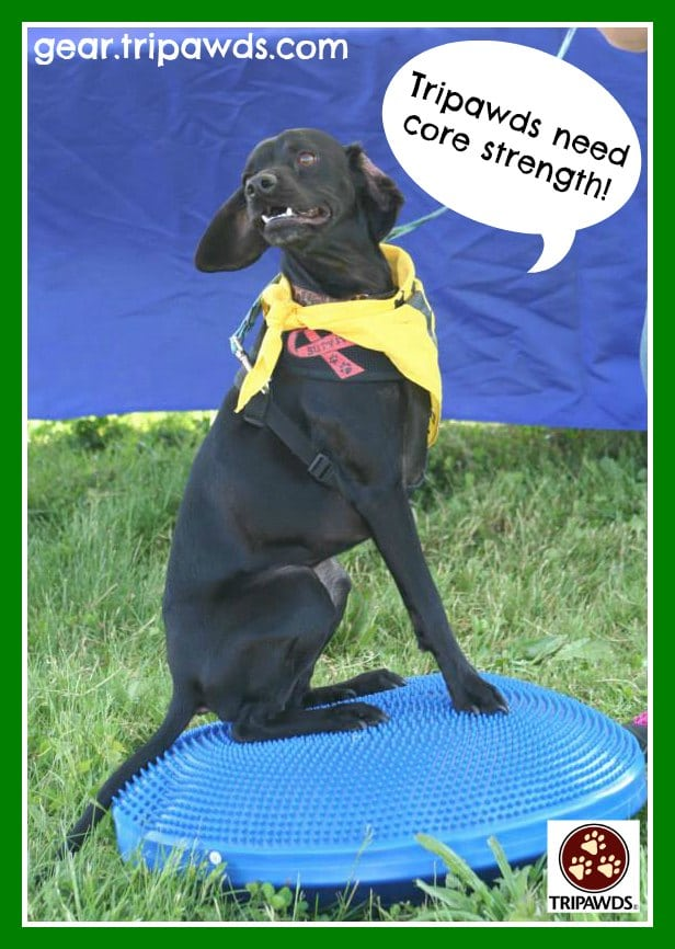 Tripawd, dog, exercise, strength