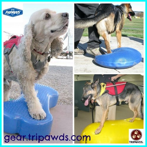 Tripawds, fitness, exercise, dog