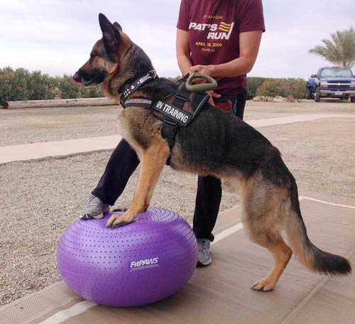 FitPAWS Trax Donut Dog Exercise Ball, Tripawd, dog, three-legged