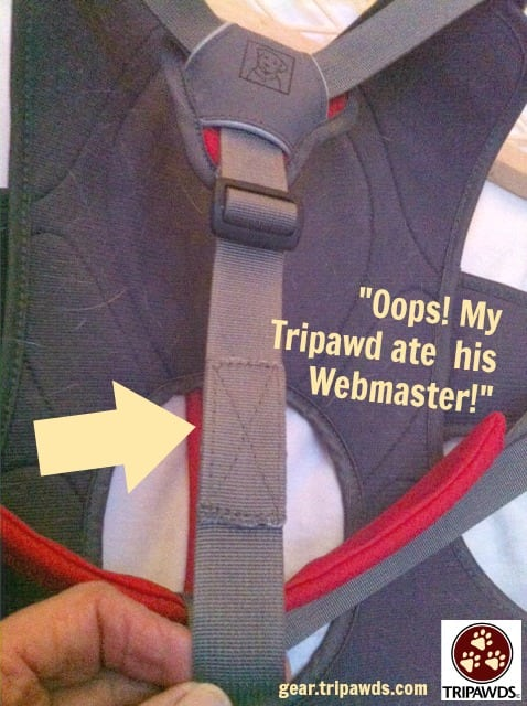 Webmaster Harness Strap Repair