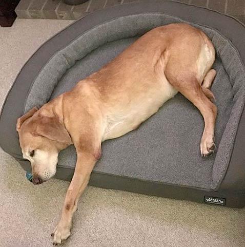 Maya Bolster Bed