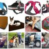Best Gifts for Tripawds