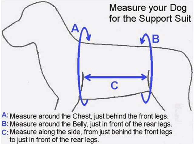 how to measure dog for custom harness