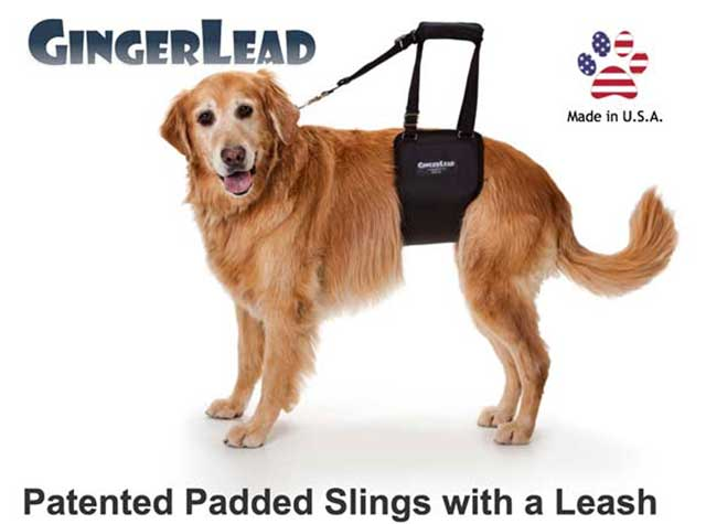 GingerLead Dog Sling Rear Support Harness