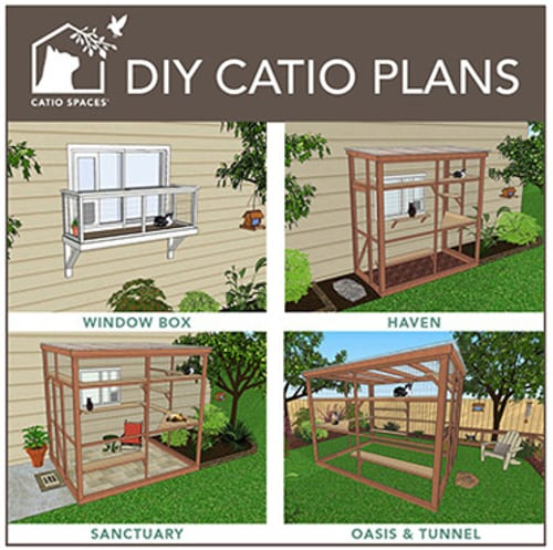 tripawd cat safety fence