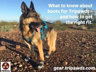 measure paws for dog boots