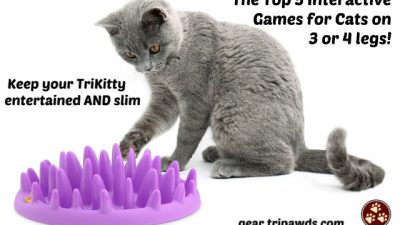 interactive games for cats