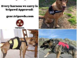 Tripawd Approved Dog Harness