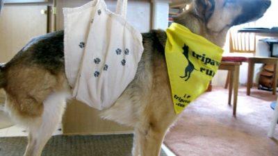 DIY dog sling
