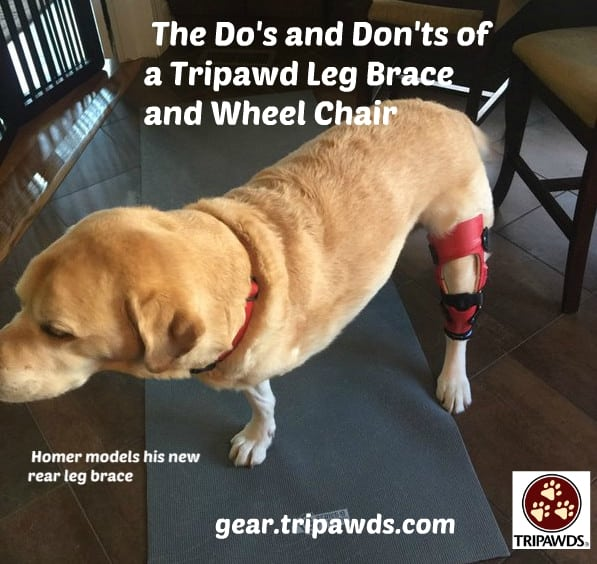 Tripawd Leg Brace and Wheel Chair