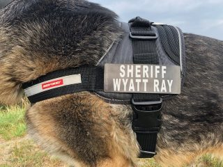 Custom Tripawd Convert Harness badge