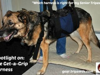 best harness senior Tripawd dog