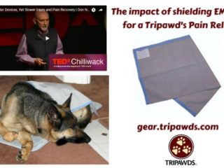 Tripawds pain relief