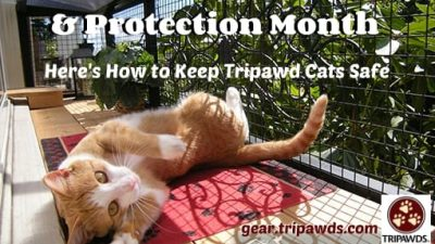 tripawd cat safety tip