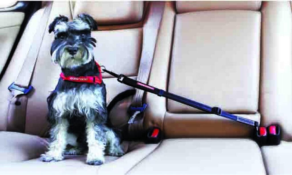 EzyDog Adjustable Seat Belt Restraint for Dogs