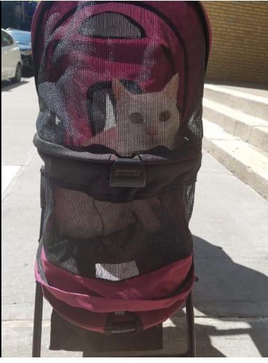 Tripawd Cat Stroller