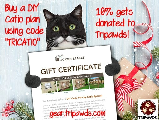 Tripawd cat catio plan