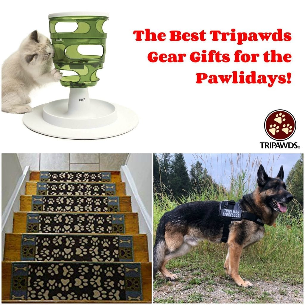 best Tripawd gear gifts