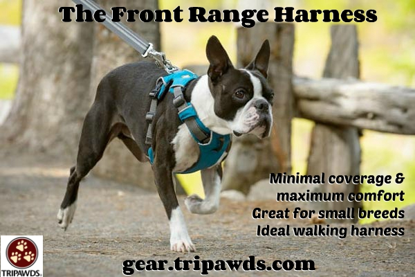 Best Tripawd Harness