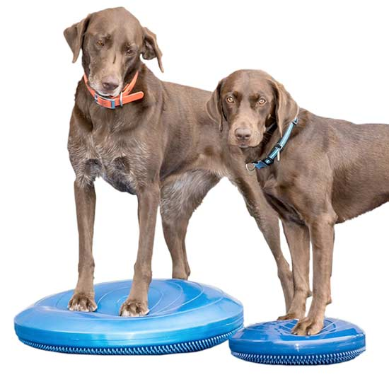 favorite Tripawds exercise gear
