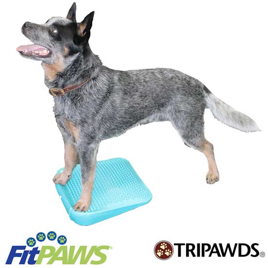 exercise gear for amputee dogs